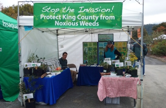 Issaquah-Salmon-Days-2015
