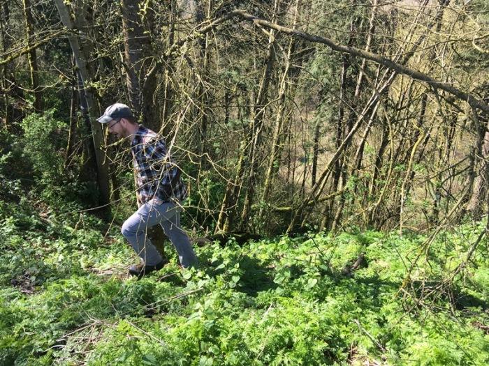 wild-chervil-weed-specialist-03292016-AKleinbeck