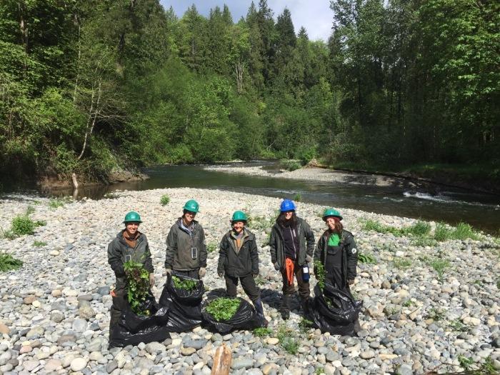 Puget-Sounds-Corps-crew-Cedar-River-Bagged-Garlic-Mustard_04252016-Photocredit_Sara_Price