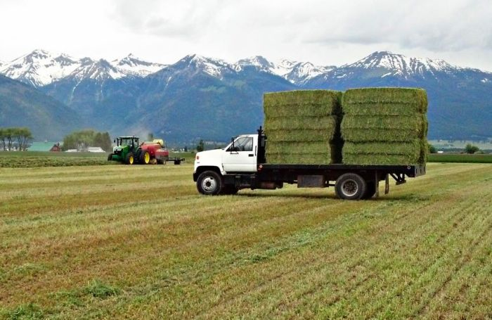 certified-wallowa-county-hay