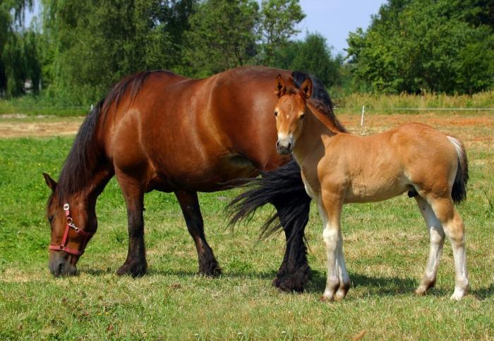 ¡Los caballos le agradecerán el control de la hierba de Santiago y otras malezas tóxicas!