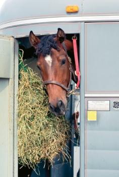 horse-weed-free-hay-trailridermag