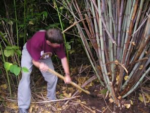 You can control invasive knotweed with a shovel (but it is very difficult!)