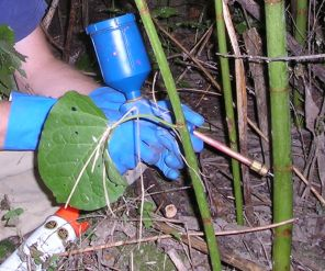 You can use a knotweed injector