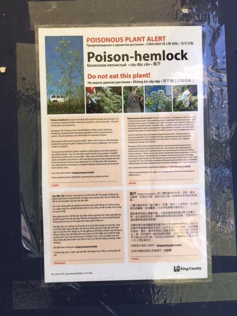 poison-hemlock-warning-poster-CarolineHughes