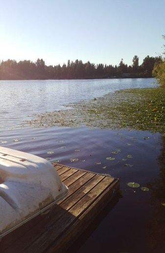 Area where lily pads were cut and removed (in the foreground). Photo by Holly D'Annunzio.
