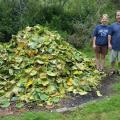 Volunteers Melanie Babyak and Randy Heppell standing by a huge pile of lily pads they helped remove. Photo by Holly D'Annunzio.
