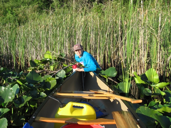 Spring Lake homeowner Tom Rohrer wading into the native pond lilies to control a purple loosestrife plant hiding in the cattails. Photo courtesy of Tom Rohrer.