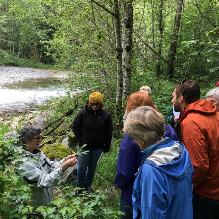 Weed watcher volunteers learn how to identify orange hawkweed found near the South Fork Snoqualmie River.