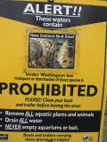 New Zealand Mudsnails are a harmful invasive species in Washington and transport o f these animals is prohibited.