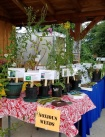 Noxious weeds on display at the Carnation Farmers Market
