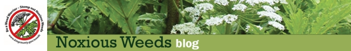 Noxious-Weed-News-Header-Blog2