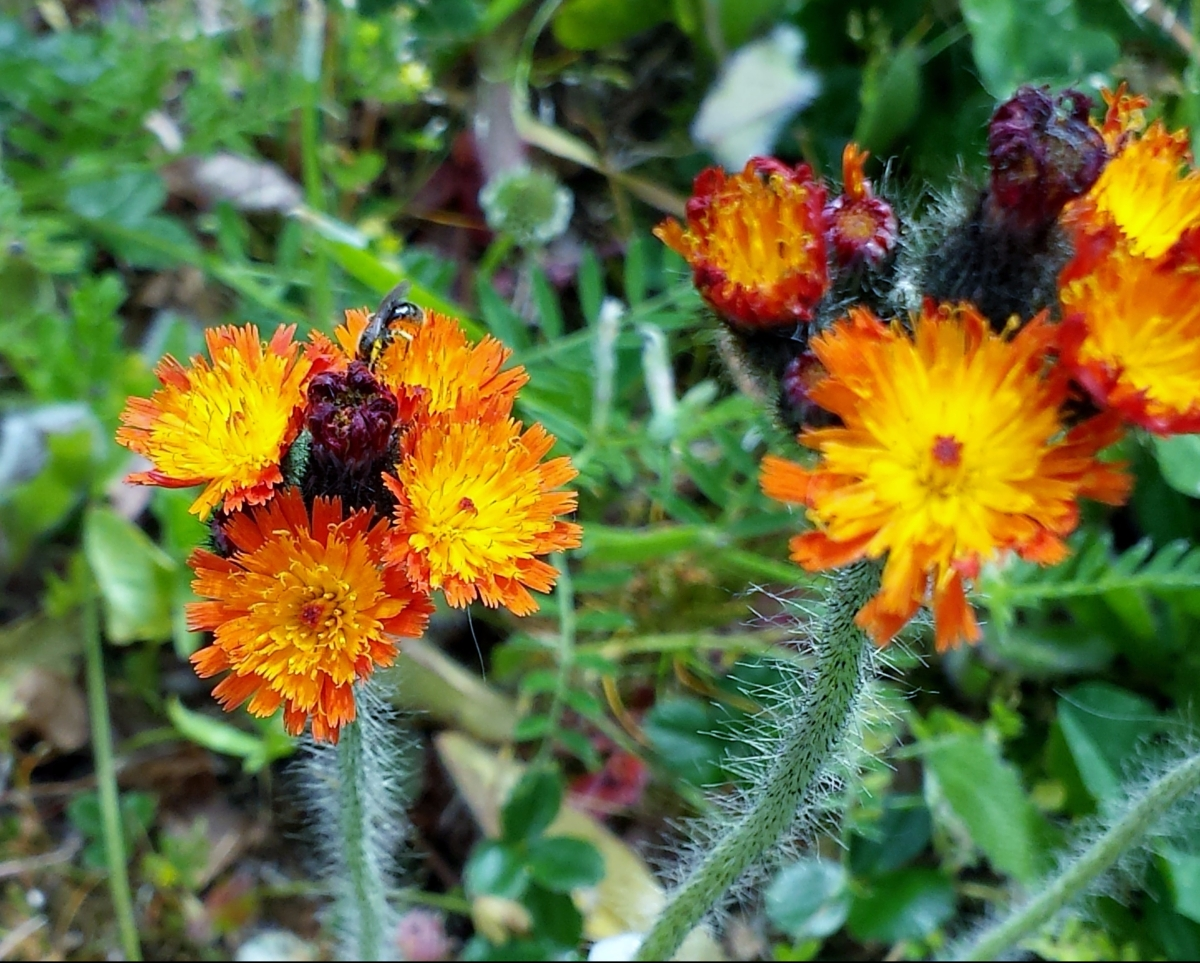 Weeds To Watch Out For June 2017 Noxious Weeds Blog