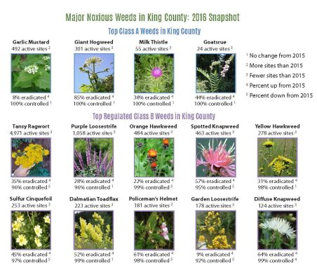 This snapshot of noxious weeds in King County highlights some of the regulated noxious weed species the program is targeting
