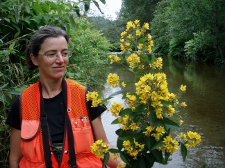 Garden loosestrife's flowers appear in clusters at stem ends. Education Specialist Sasha Shaw holds a garden loosestrife plant on the Raging River.