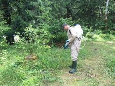 Controlling a high priority noxious weed.