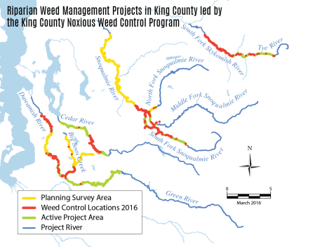 This map highlights the King County rivers where the riparian noxious weed team targets knotweed