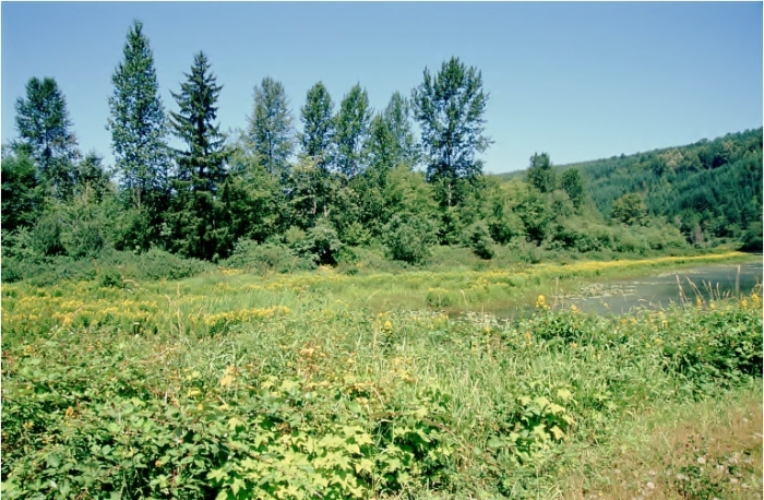 rutherford slough_2003