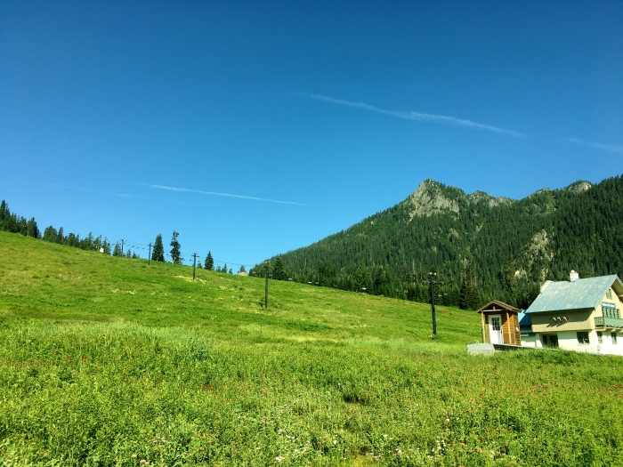 Snoq-Pass-Ski-Hawkweed_July2017.JPG