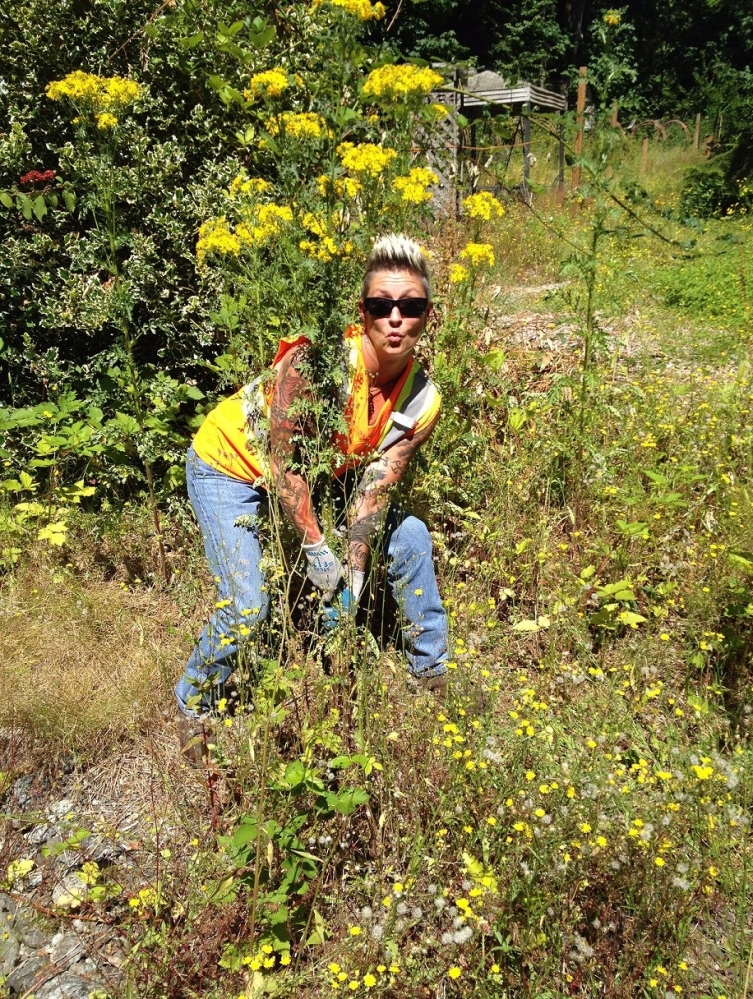 King County Roads vegetation crew member poses while pulling tansy ragwort plant.