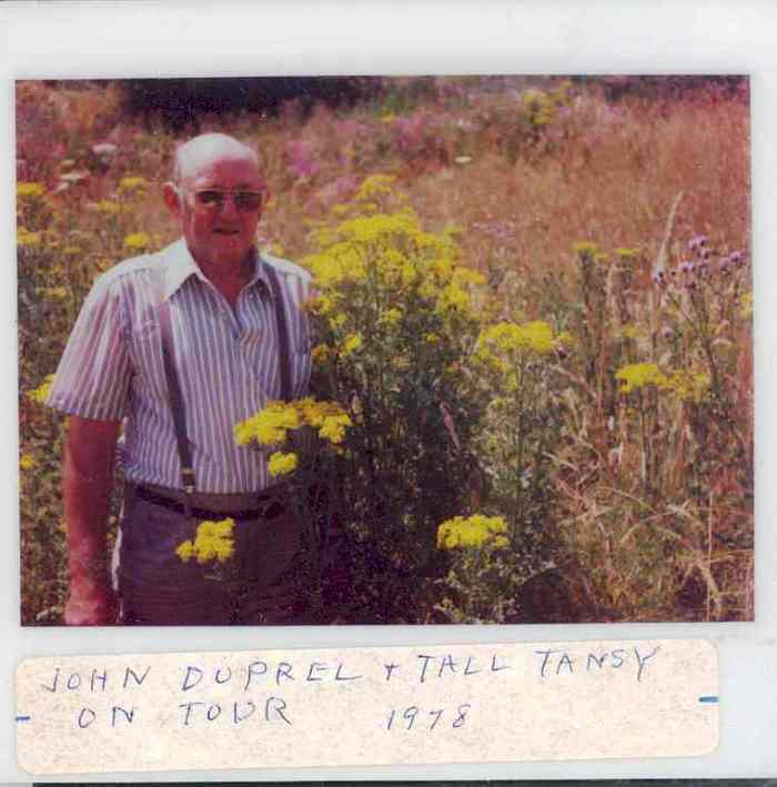 Man standing next to tall tansy ragwort in a 1978 photo.