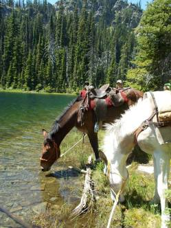 Trail horses getting a drink from a mountain lake