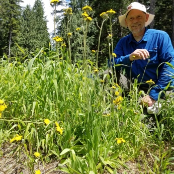 Weed watcher volunteer Monty Vanderbilt looks at newly discovered patch of invasive yellow hawkweed in the parking lot of the Middle Fork trailhead.