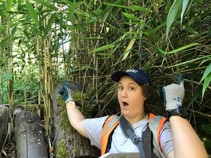 Bamboo in Swamp Creek wetland, photo by Cynthia Saleh