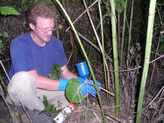 person using a stem injector to control knotweed