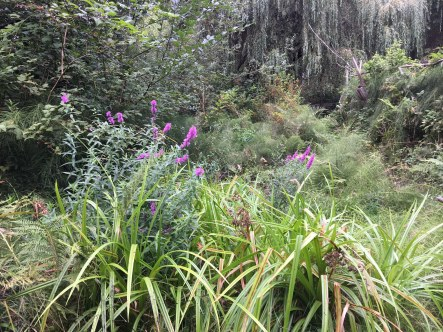 Purple loosestrife infiltrating a native wetland.