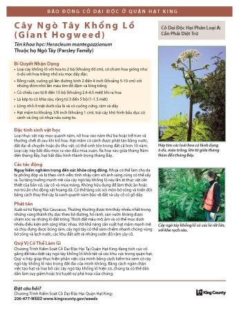 giant_hogweed_Vietnamese_Page_1