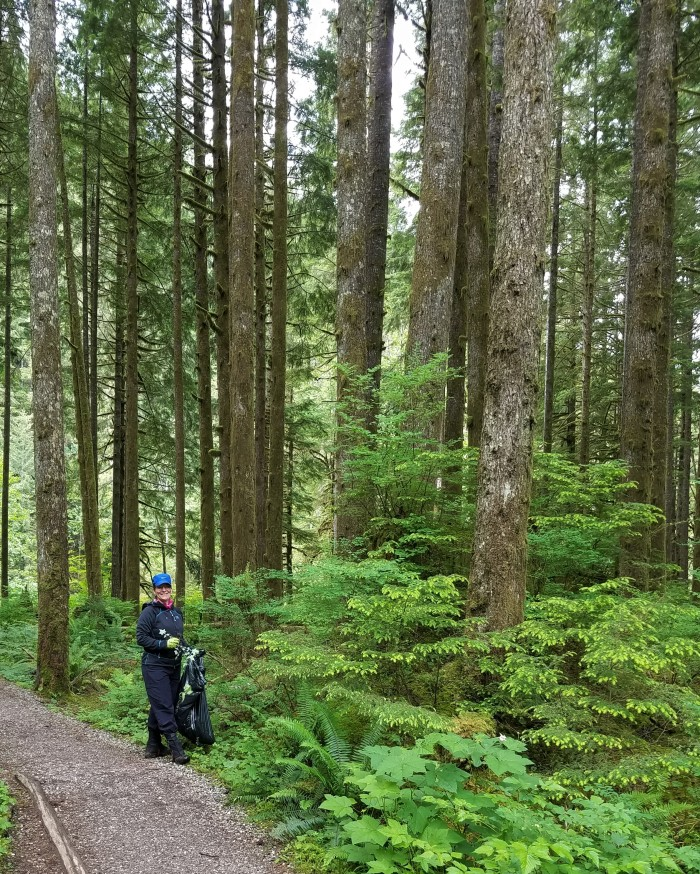 Big-trees-and volunteer-pulling-herb-robert-Middle-Fork-Trail-SShaw-20170611_101554