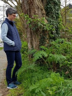 poison-hemlock plant by a tree and a person