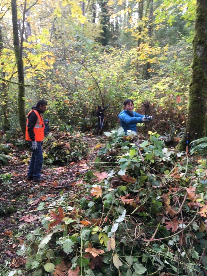Volunteers-pulling-weeds-CheastyGreenspace-GSD2017-SShawIMG_0213