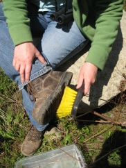 Weed free boots help stop the spread on invasive species to new parks.
