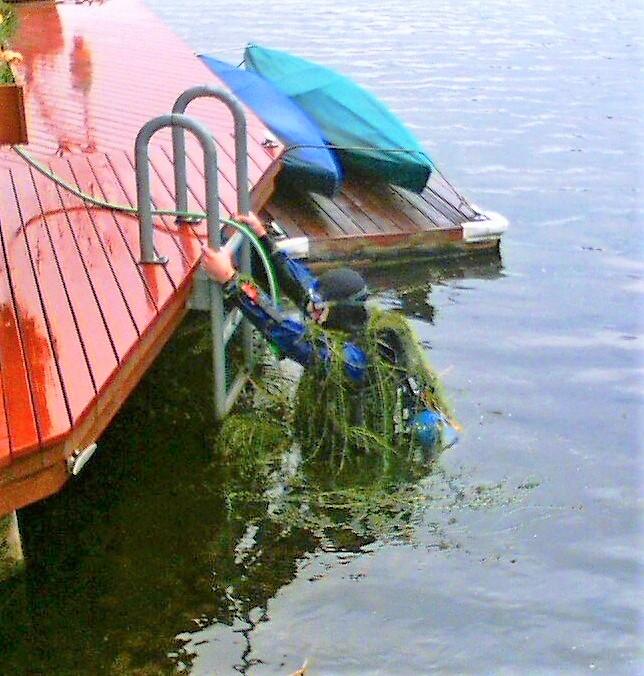 -Brazilian-elodea-diver-Lake-Union