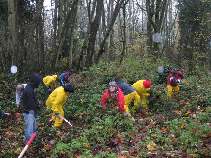 volunteers removing invasive plants in a forest