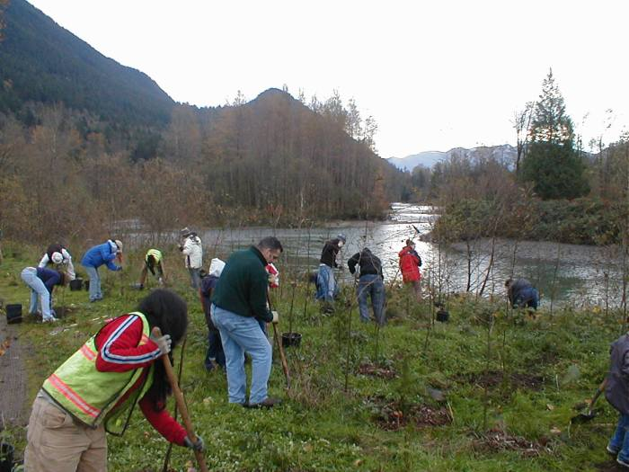 volunteers planting on a river