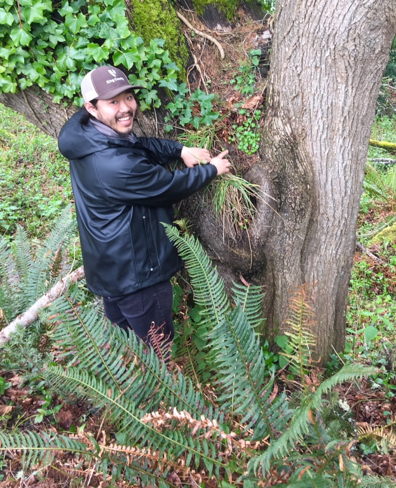 King County staffer finding a noxious weeds