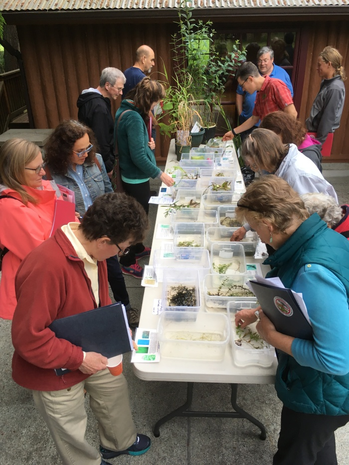 training class on aquatic weeds