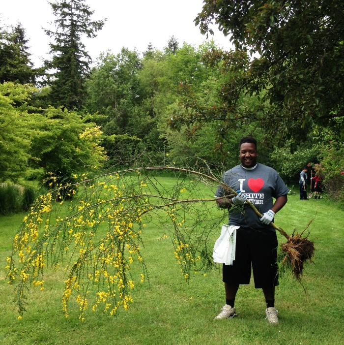 volunteer with Scotch broom