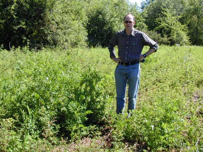 Man standing in a field of goatsrue