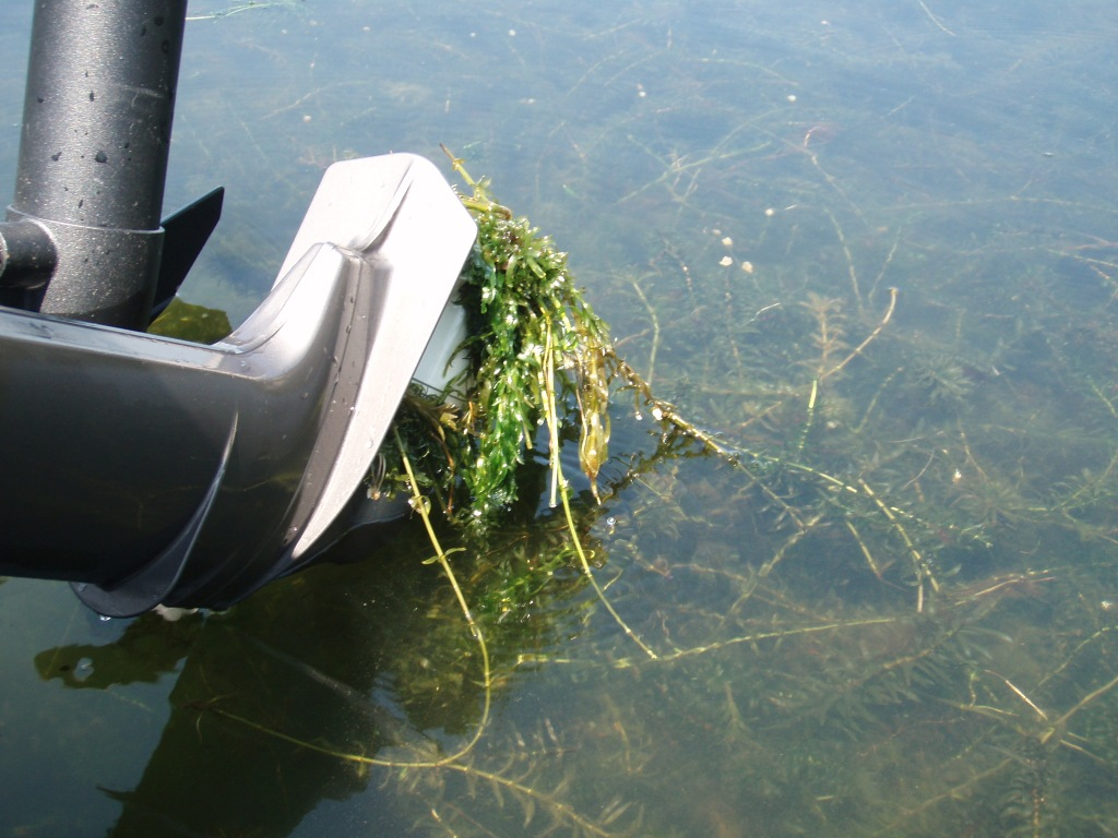 weeds on a boat motor