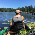 canoeing in a lake with a bag of purple loosestrife