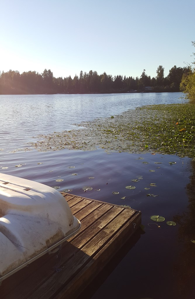 dock with cleared area around it