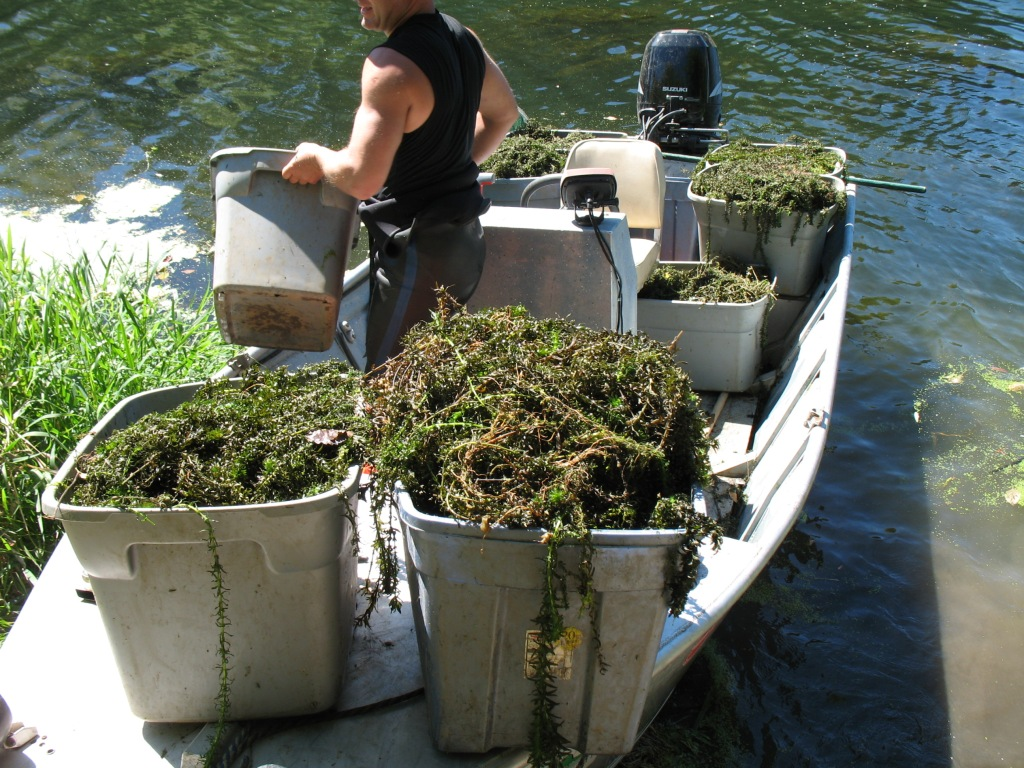 buckets of Egeria plants on a boat