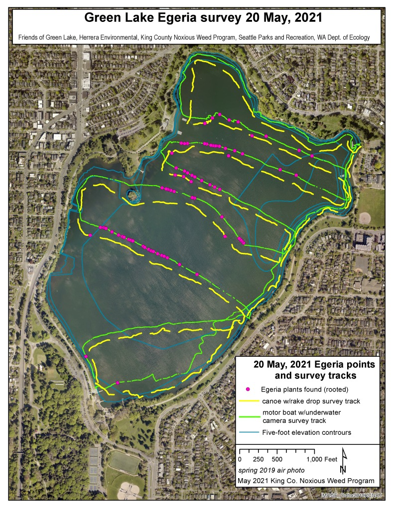 Map of Green Lake showing colored lines where Egeria was found