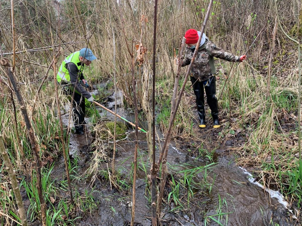 Two people searching for Egeria in the outlet stream of Lake Rasmussen