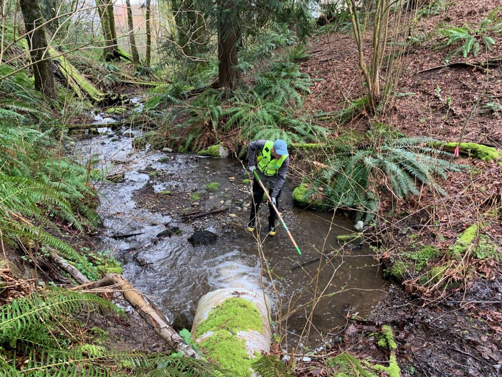 Person with a sampling rake inspects outlet of Lake Rasmussen for Egeria